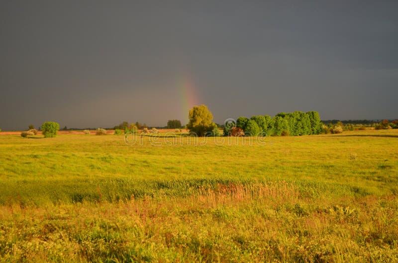 在雨以后的维尔京草甸 免版税库存照片