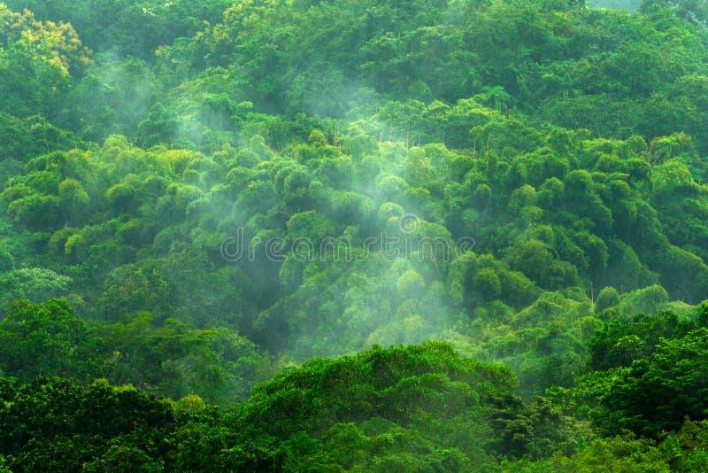 在雨天期间,热带森林 与雨和雾的绿色密林风景 与大美丽的树的森林小山在圣玛尔塔,科洛火山 免版税图库摄影