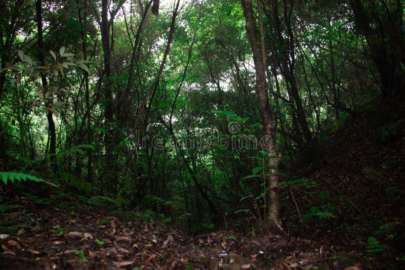 在雨季的热带林木 库存照片