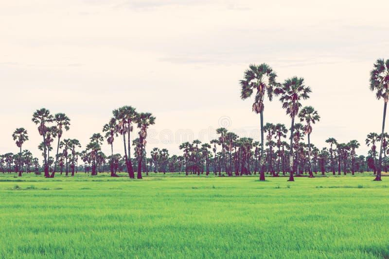 在雨季的米领域 减速火箭的葡萄酒过滤器作用 免版税库存图片