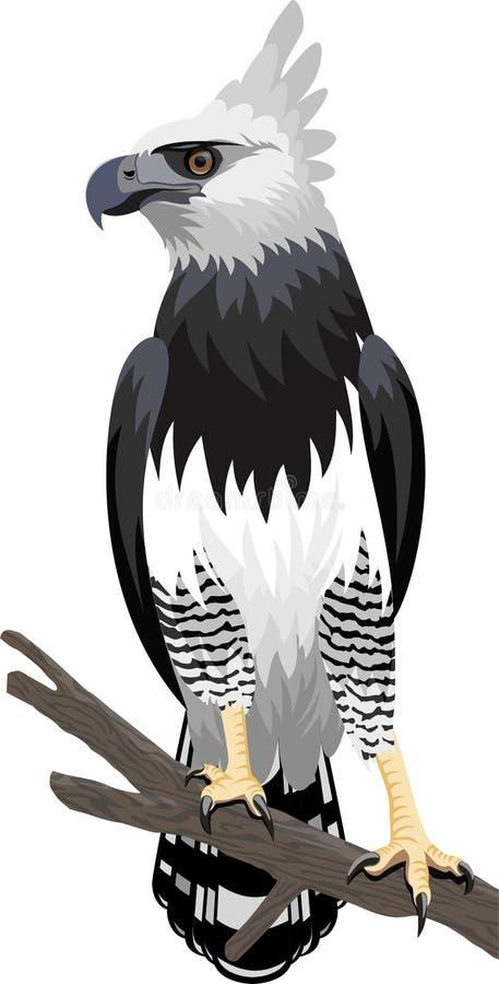 在雨林密林导航哈耳皮埃鹰在巴西 库存例证