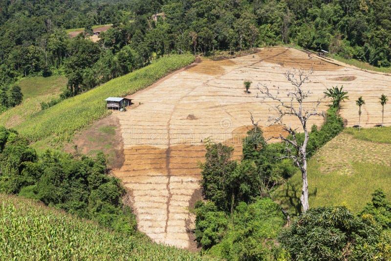 在雨林小山的高看法与砍伐森林的种田的在北泰国 图库摄影