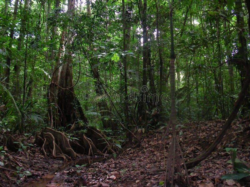 在雨林掩藏的军事,法语圭亚那 库存图片