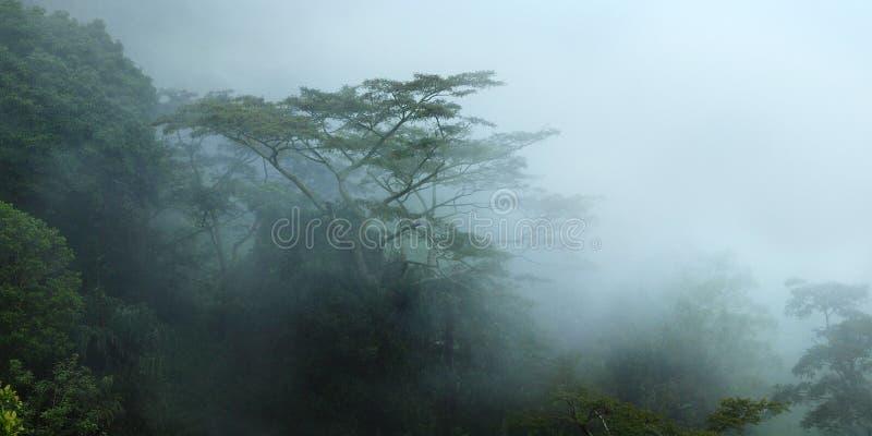 在雨林的树在薄雾下 库存图片