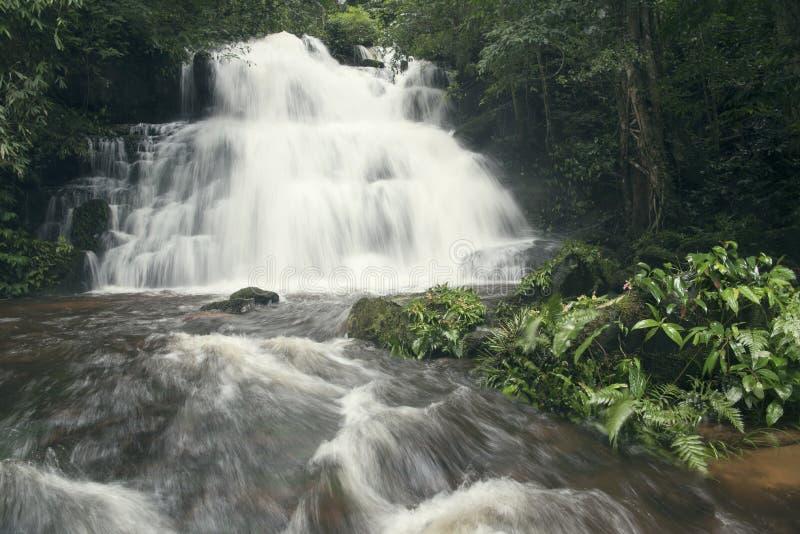 在雨林,生态系统的美丽的瀑布 免版税图库摄影