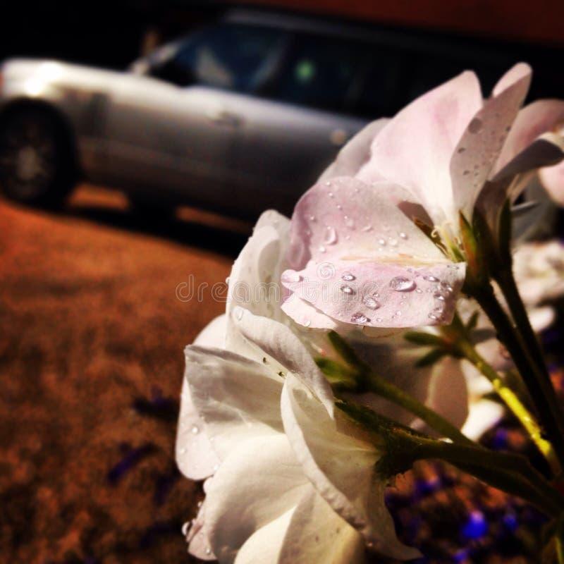 在雨以后的花 免版税图库摄影