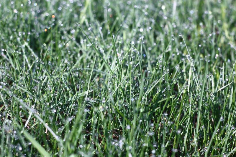 在雨以后的草。 库存图片