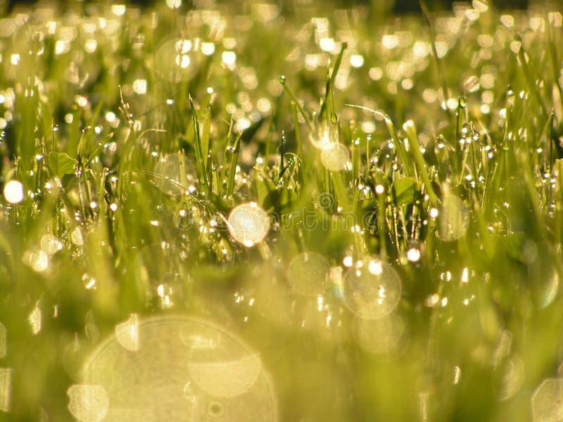 在雨以后的草 免版税库存图片