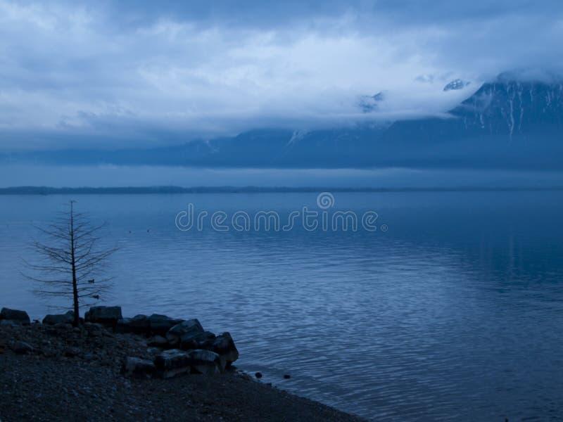 在雨以后的紫胶Leman 图库摄影