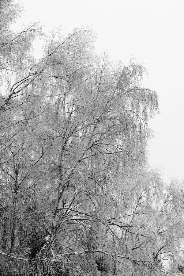 在雪下的树枝 免版税图库摄影