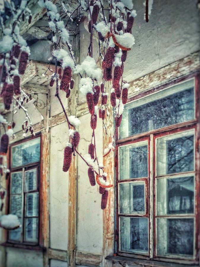 在雪下的桦树芽在一个老被放弃的房子的背景 库存照片