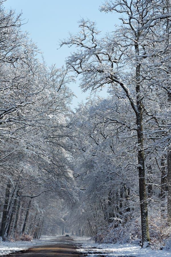 在雪下的森林公路在Barbizon村庄 库存照片