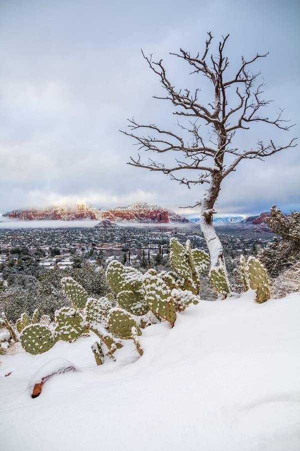 在雪不典型地埋没的仙人掌在Sedona附近 库存照片