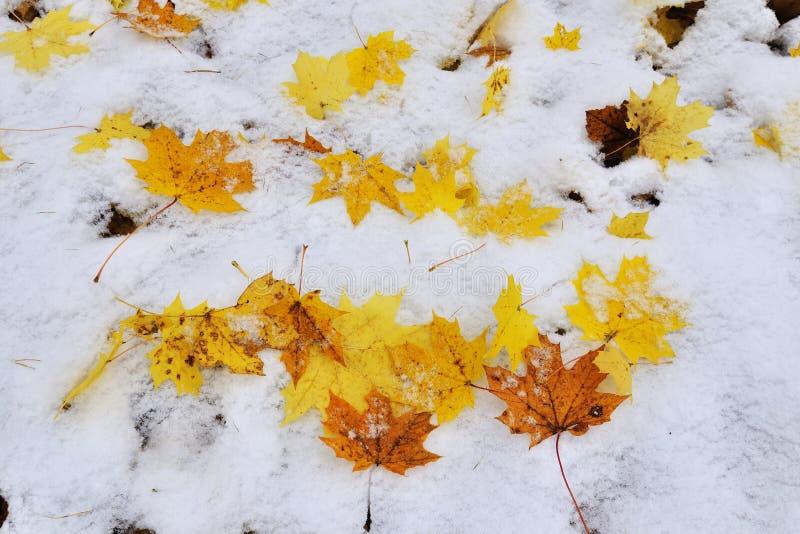 在雪之下的秋天叶子 免版税库存照片