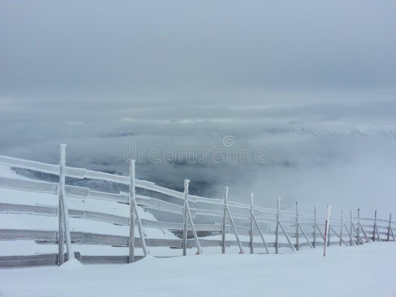 在雪之下 免版税图库摄影