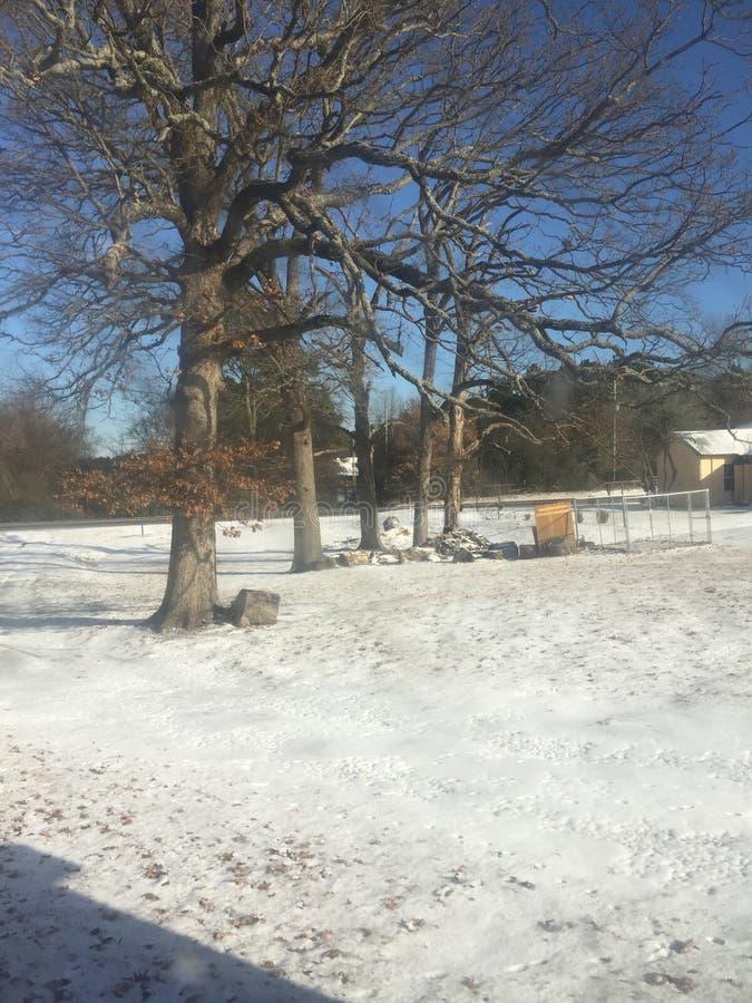 在雪以后的冬天早晨 免版税库存图片