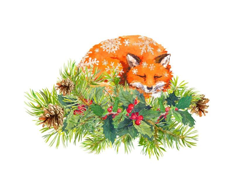 在雪剥落的睡觉狐狸 云杉的树枝,圣诞节槲寄生 水彩 库存例证