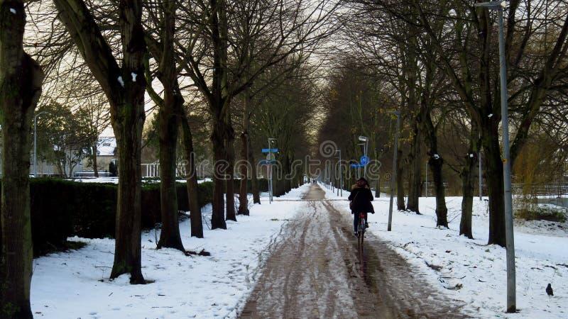 在雪和冰盖的自行车道路的骑马自行车在冬天期间 库存照片
