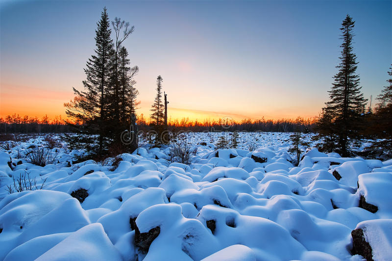 在雪和树以后 免版税库存图片