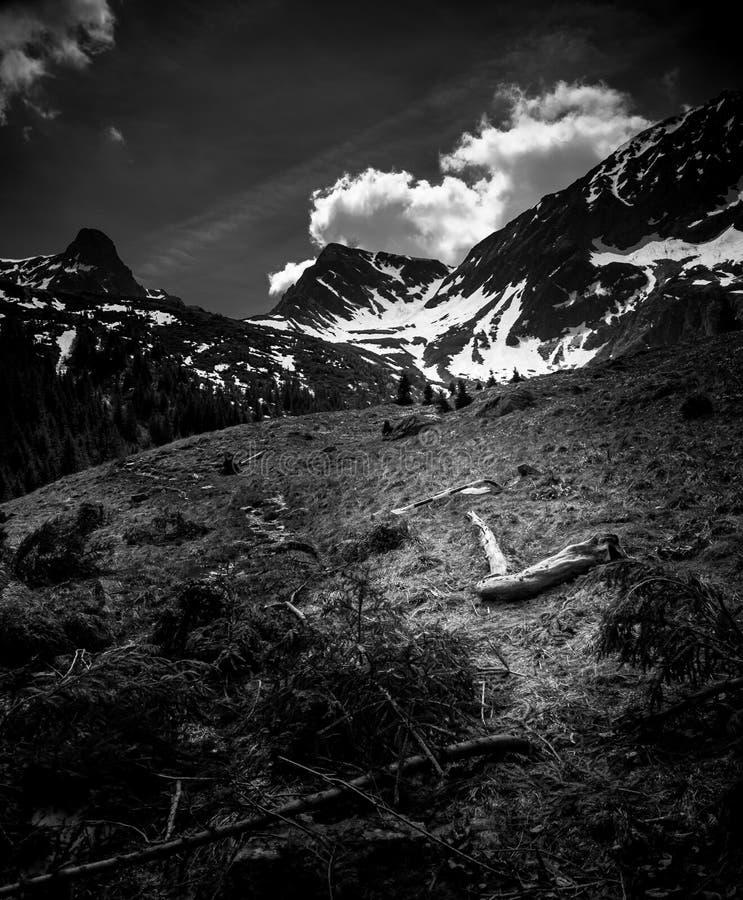 在雪崩以后在Transylvanian阿尔卑斯 免版税库存照片