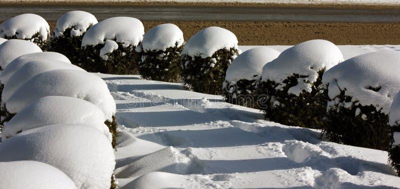 在雪形成的复杂样式;普莱西德湖城,纽约,美国 免版税库存照片