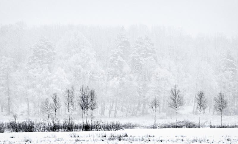 在雪慌张的木头 免版税库存图片