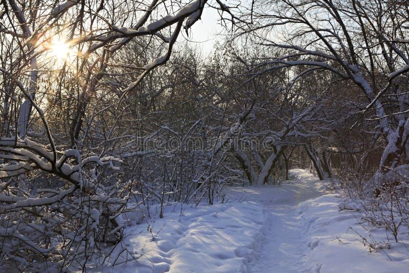 在雪漂泊的道路通过树 图库摄影