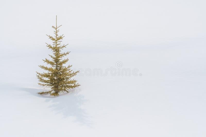 在雪的一棵孤立树 免版税图库摄影