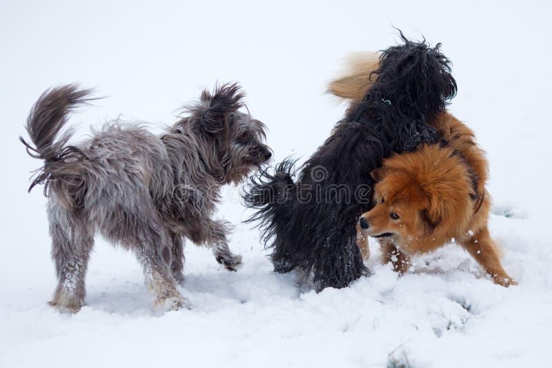 在雪的三条逗人喜爱的狗 免版税图库摄影