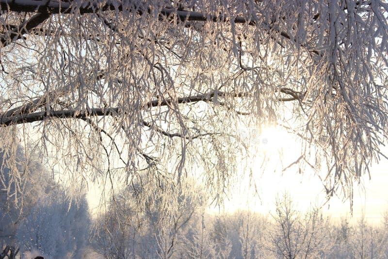 在雪的两棵树 库存图片