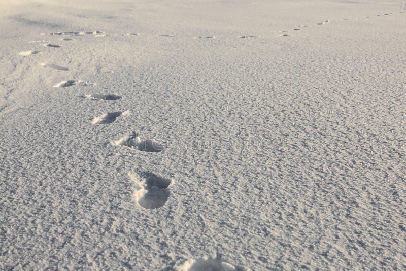 在雪的人的脚步 库存图片