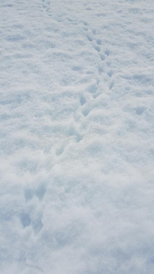 在雪的企鹅脚印 图库摄影