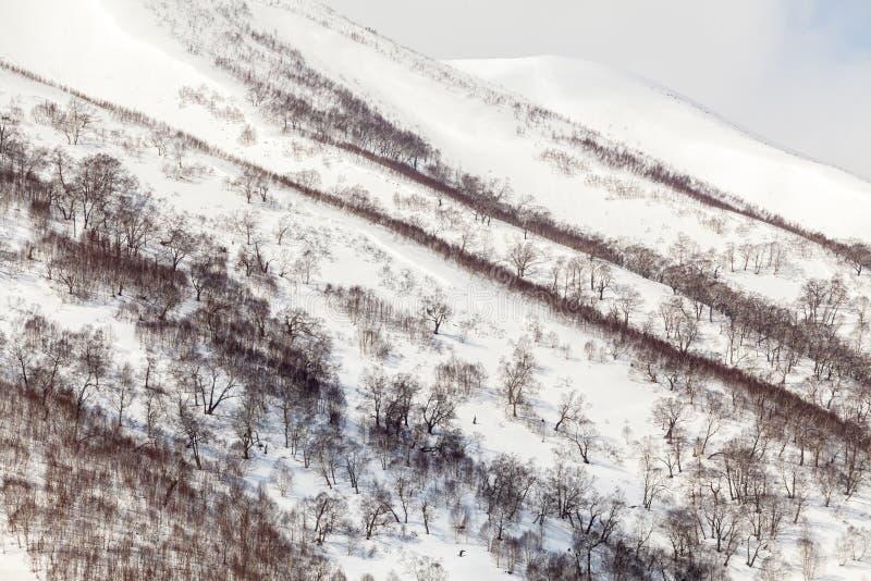 在雪的光秃的树加盖了山,冬天背景 免版税库存照片