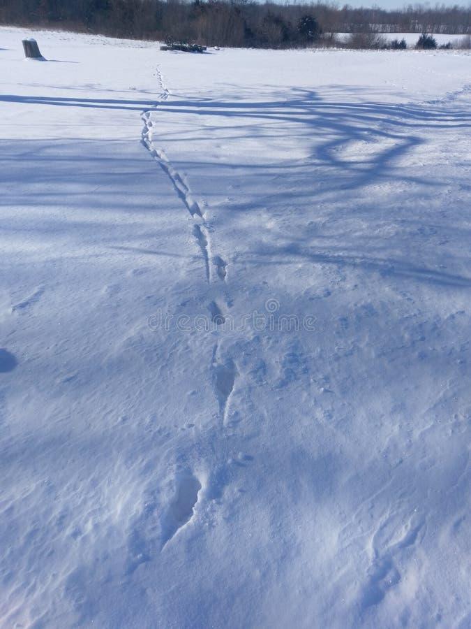 在雪的动物脚印2018年1月6日在西印第安纳 图库摄影
