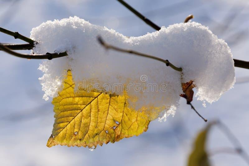 在雪的叶子 免版税库存照片