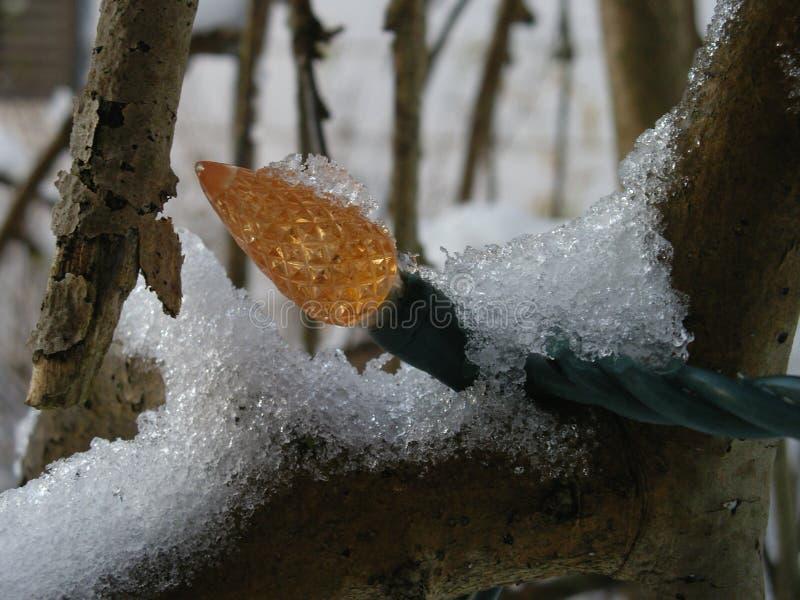 在雪的圣诞灯在树 库存图片