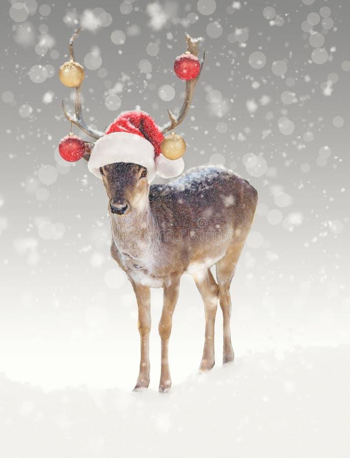 在雪的圣诞节驯鹿与圣诞老人帽子 免版税库存图片