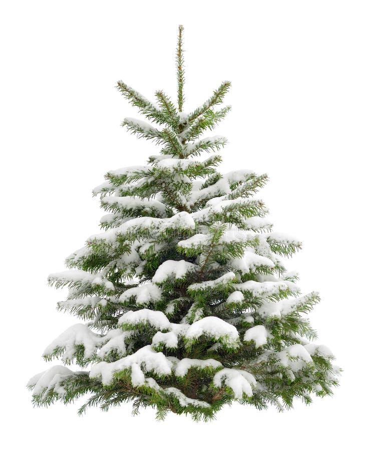 在雪的完善的小的圣诞树 库存图片