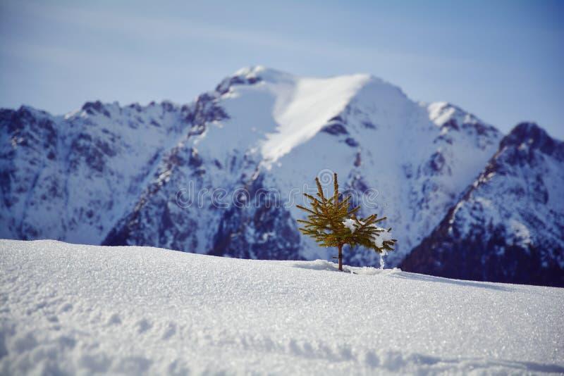 在雪的少许结构树 库存图片