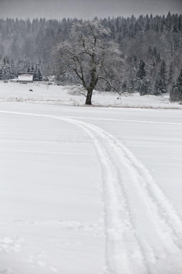 在雪的弯曲的轨道在唯一树附近的领域 免版税库存图片