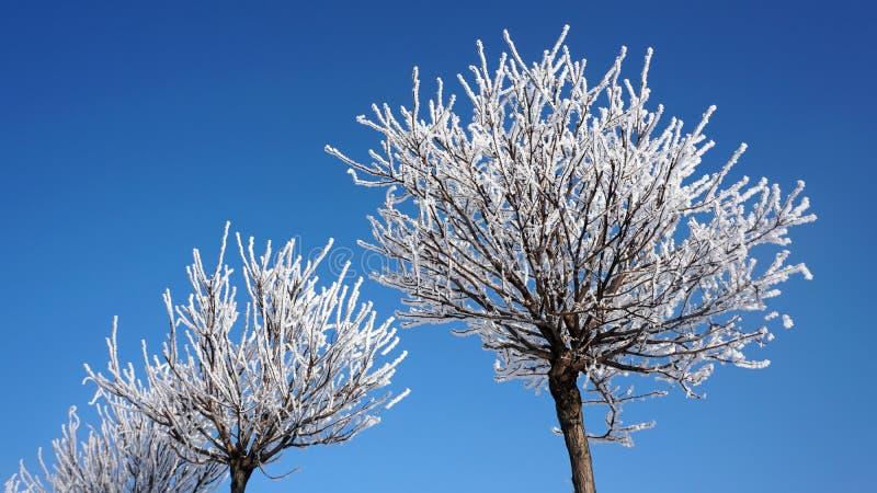 在雪的树反对天空 免版税库存照片