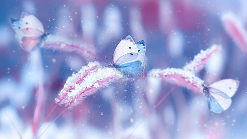 在雪的美丽的蝴蝶在蓝色和桃红色背景的野草 降雪艺术性的冬天圣诞节自然imag 免版税库存图片