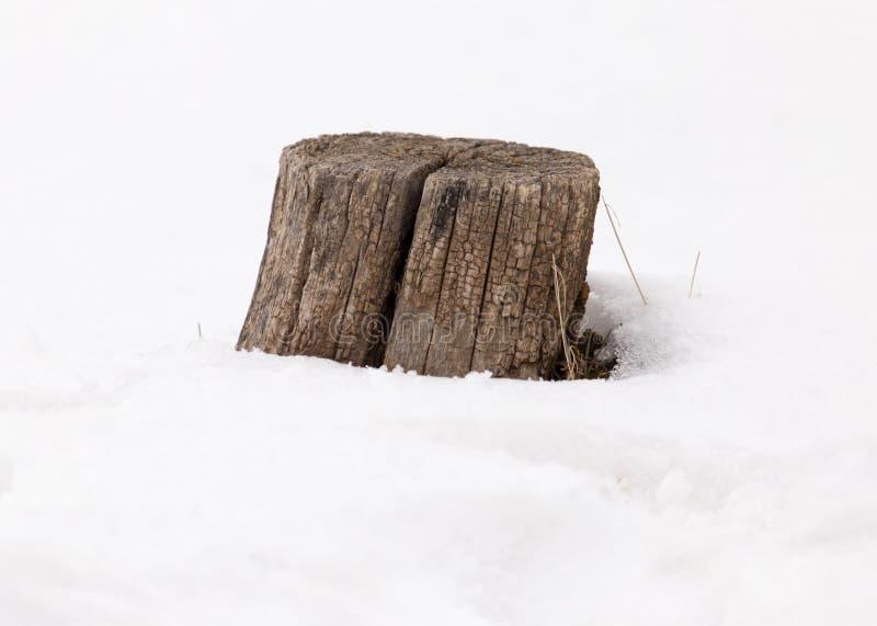 在雪的老树桩在冬天 库存照片