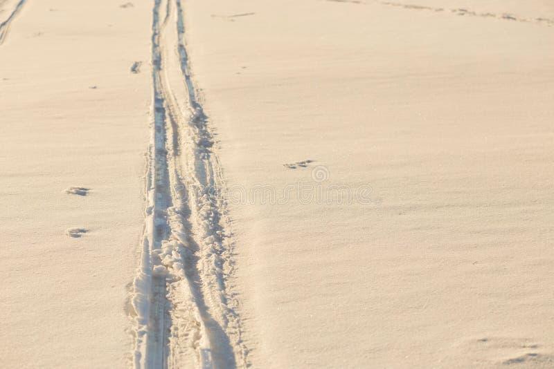 在雪的脚印在金黄小时内 免版税库存照片