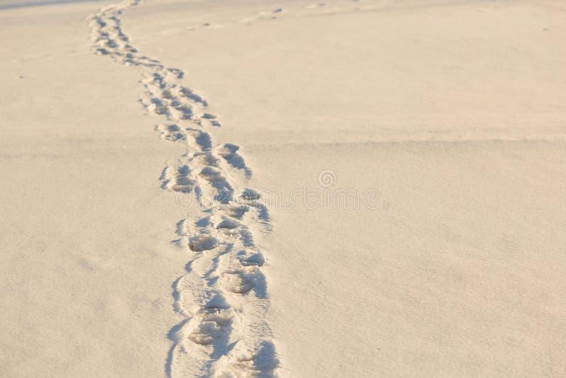 在雪的脚印在金黄小时内 免版税库存图片