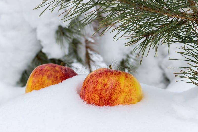 在雪的苹果 库存图片
