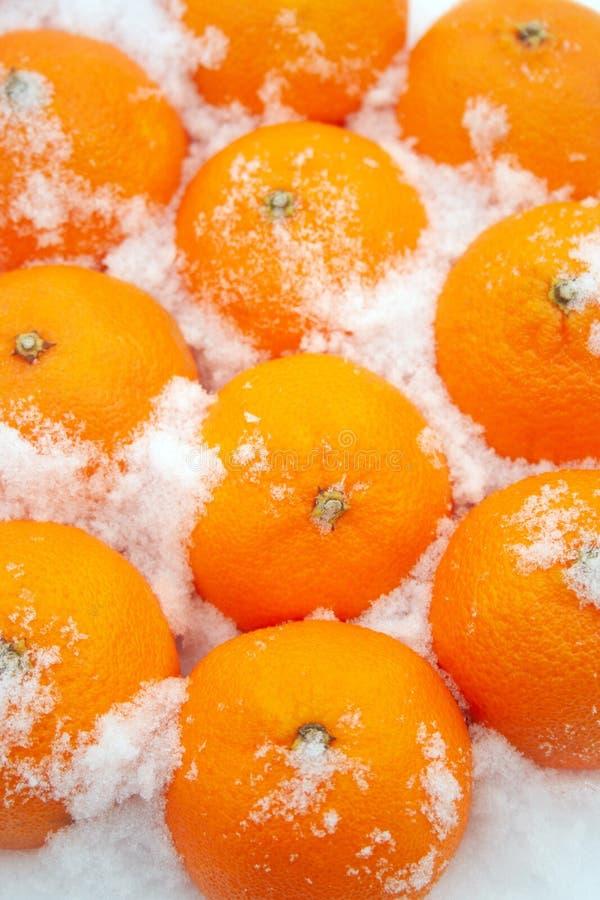 在雪的蜜桔 库存照片