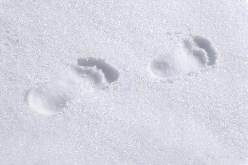 在雪的赤足脚印 库存照片
