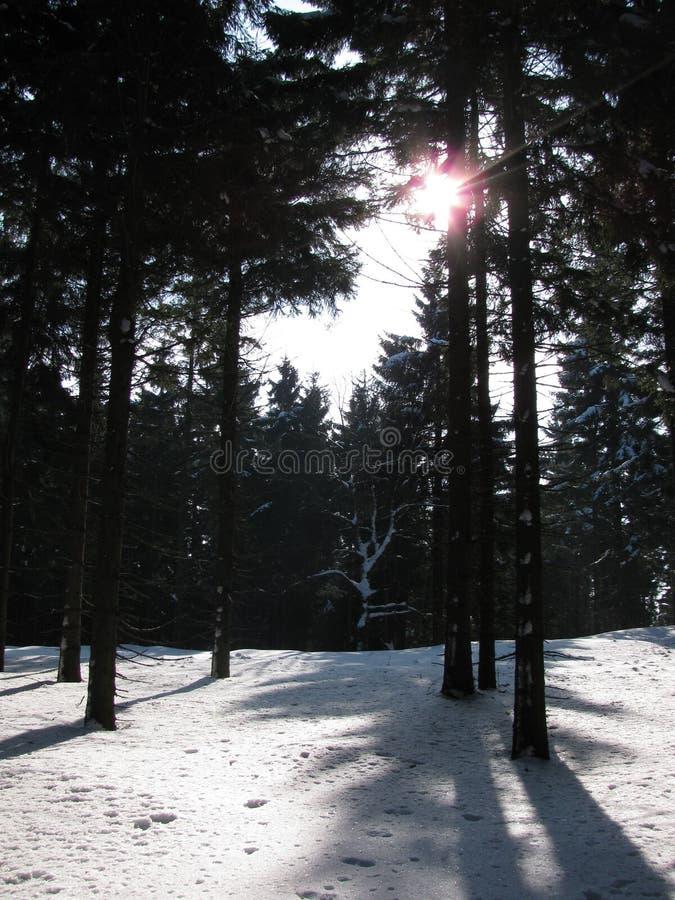 在雪的轨道在冬天森林里 免版税库存图片