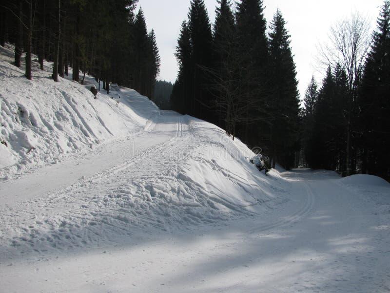在雪的轨道在冬天森林里 库存照片